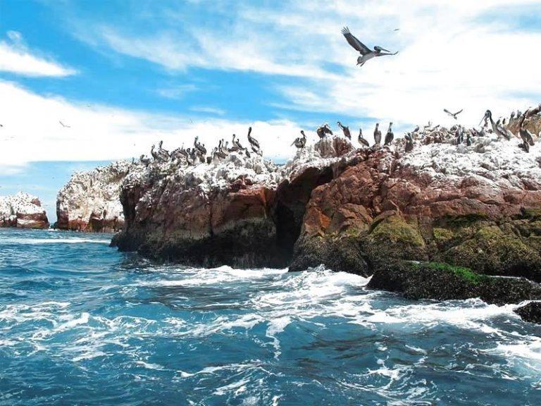 Paracas Full Day